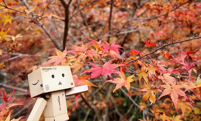 大矢田神社(岐阜県美濃市)の紅葉
